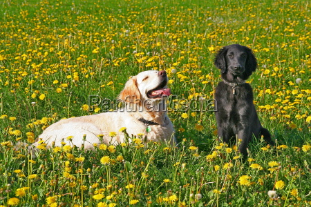 hay, fever - 637605