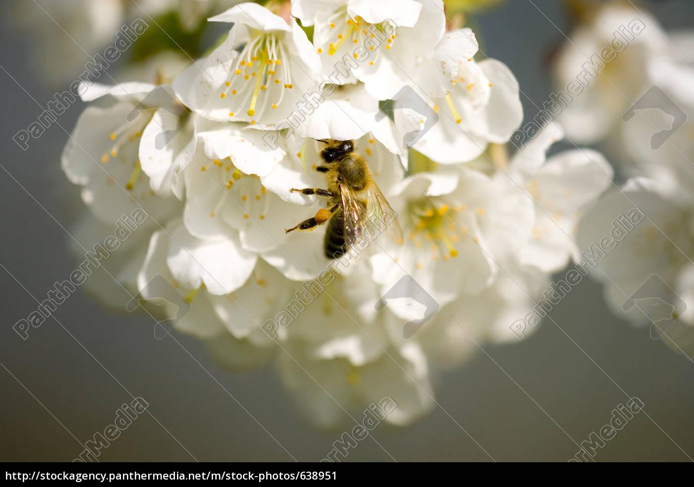 nectar, augend - 638951
