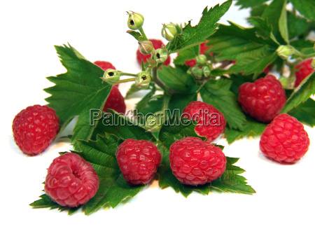 raspberries - 639347