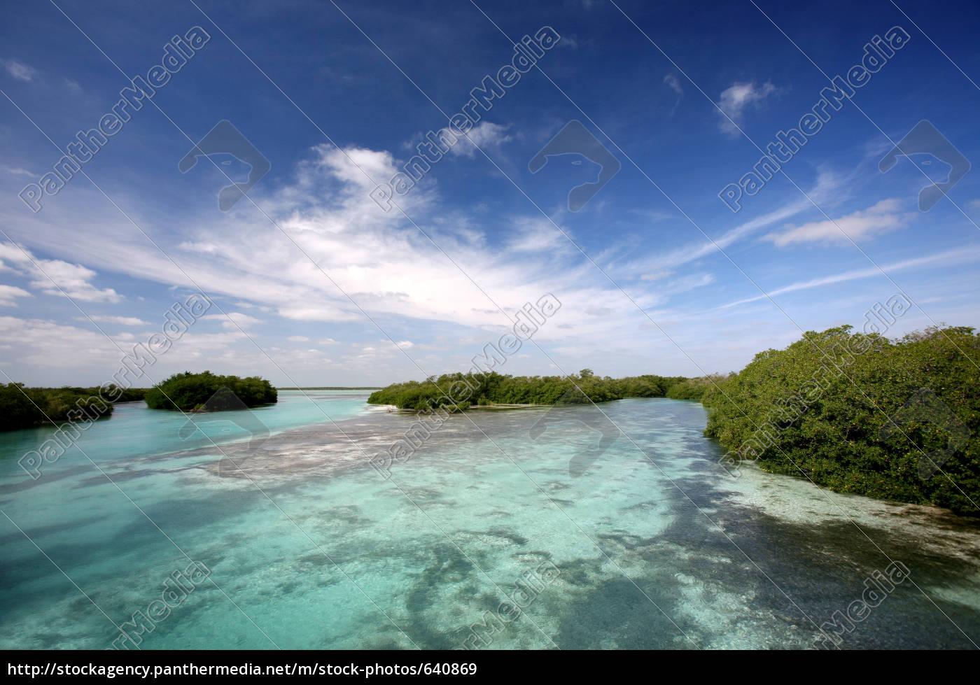 mangroves - 640869