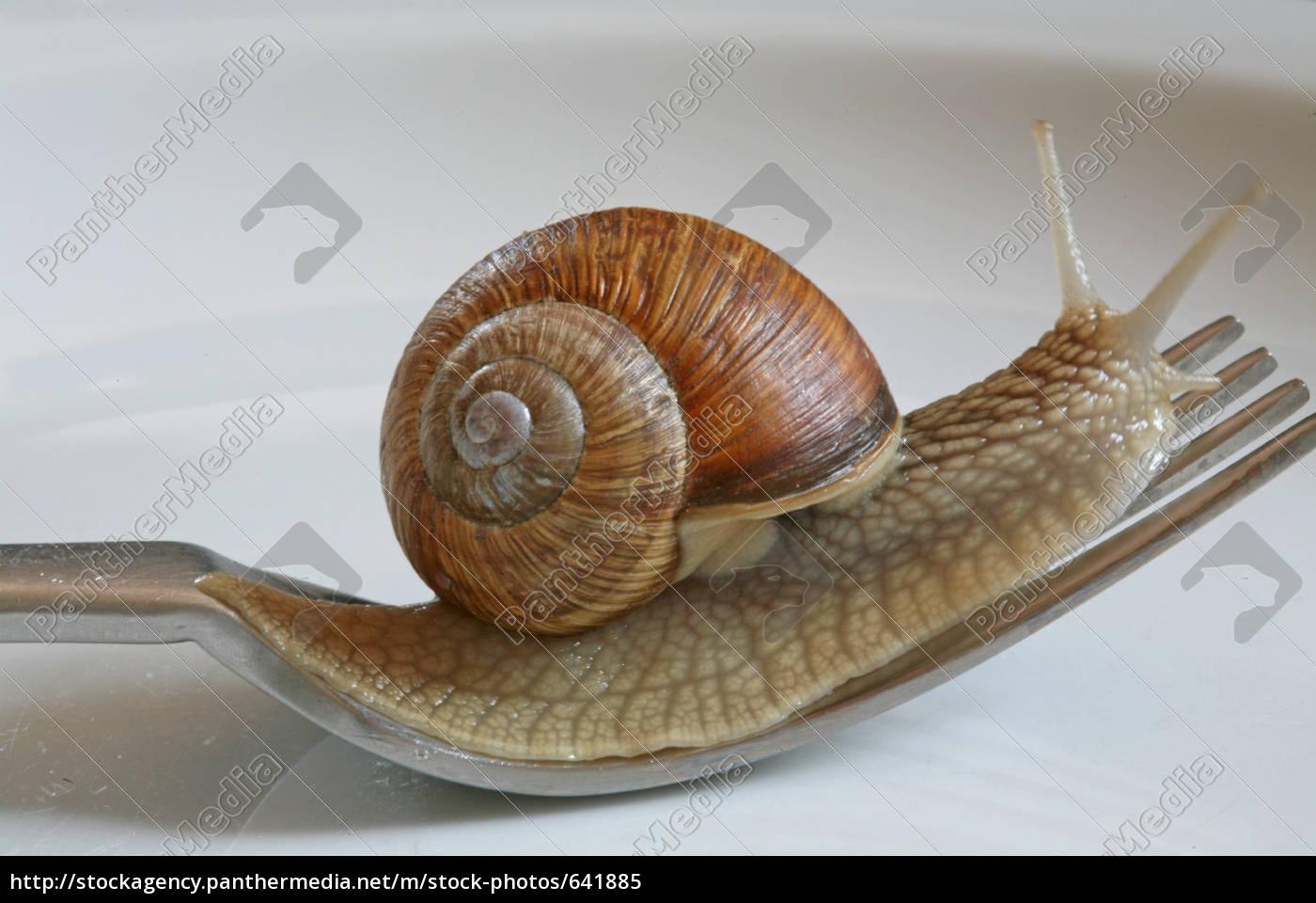 snail, snail - 641885