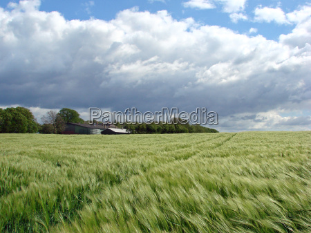 barley, in, the, wind - 647329