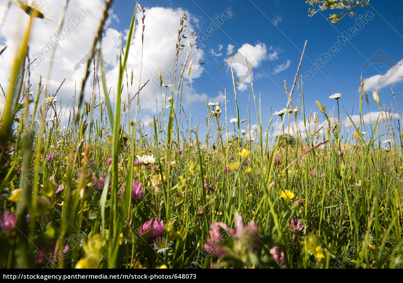 spring, meadow, on, the, alb - 648073
