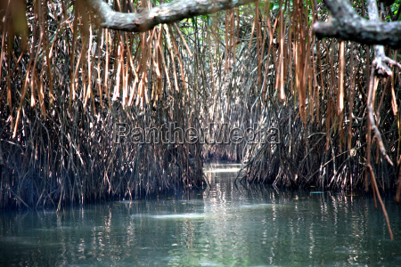 mangrove, forest - 650406