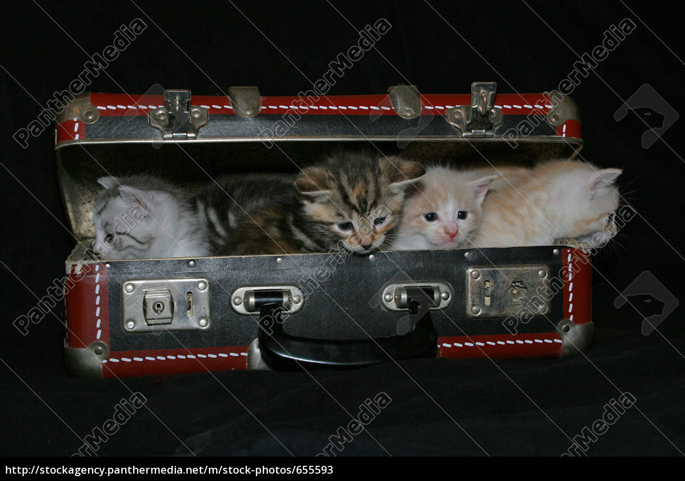 cats, suitcase - 655593