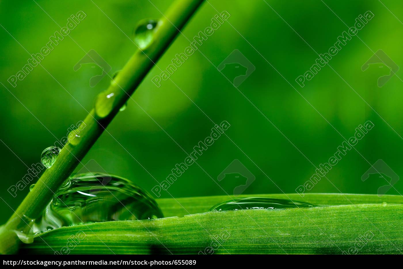 raindrop - 655089