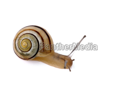 slug - 655920