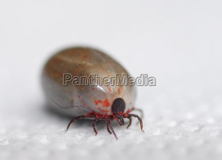 ticks terror iii
