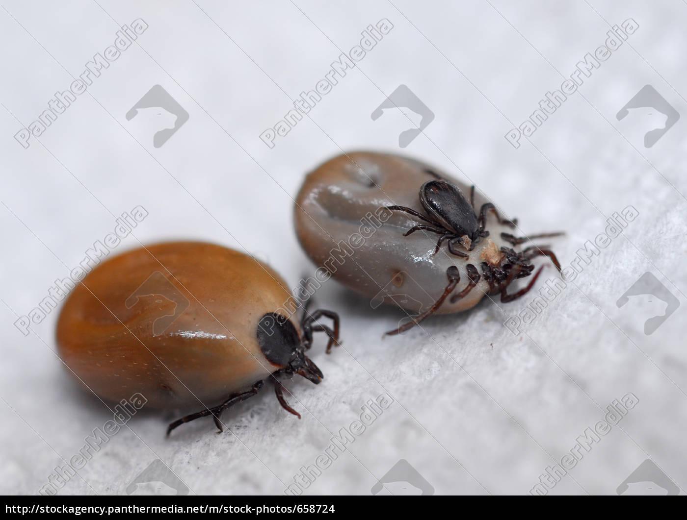 ticks, terror - 658724