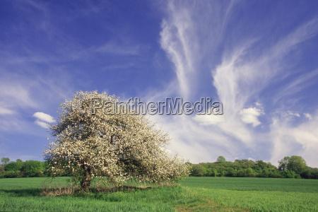 apple, tree, with, butterflies - 661886