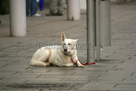 waiting, dog - 661355