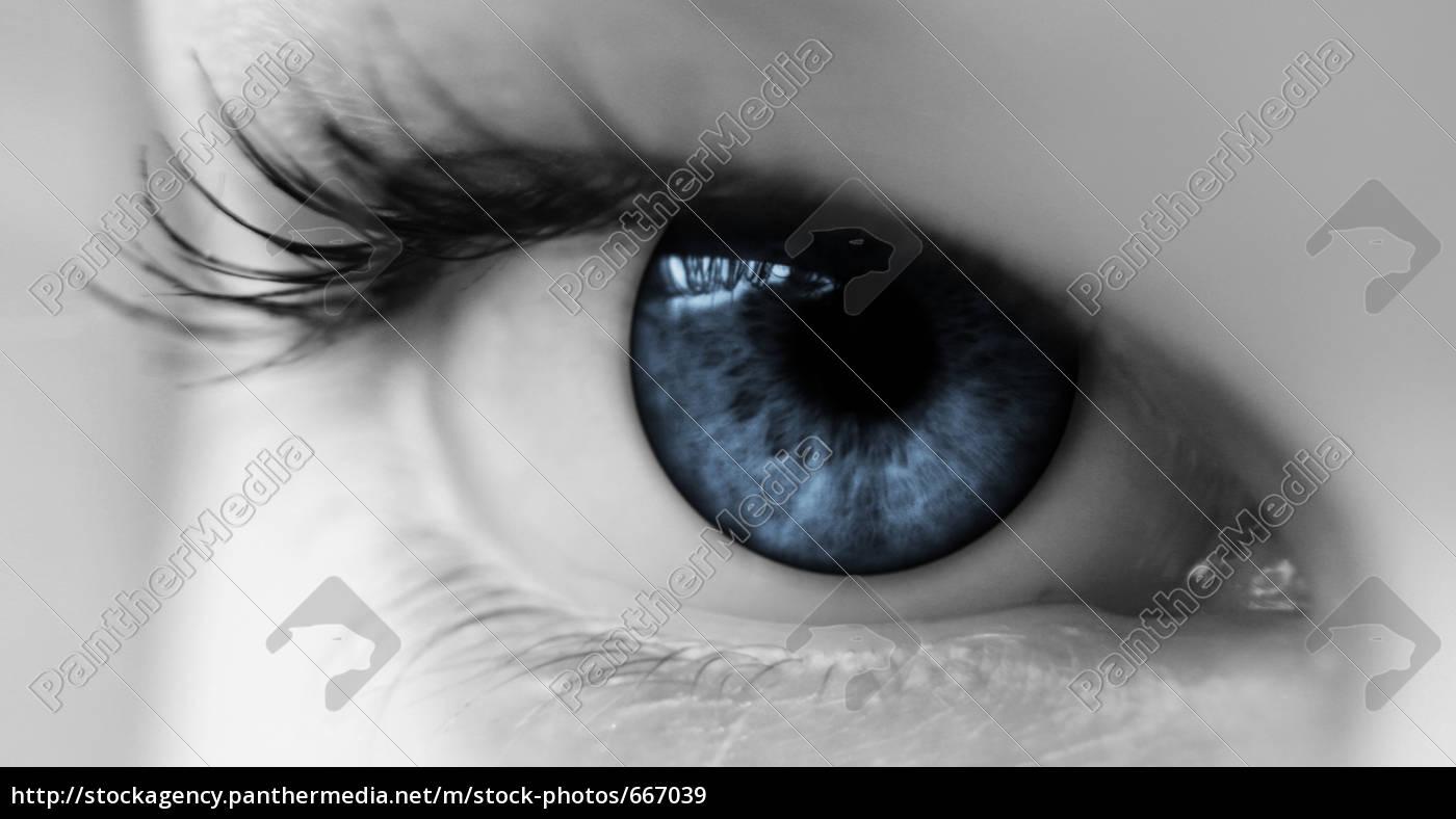 blue, eye, ii - 667039