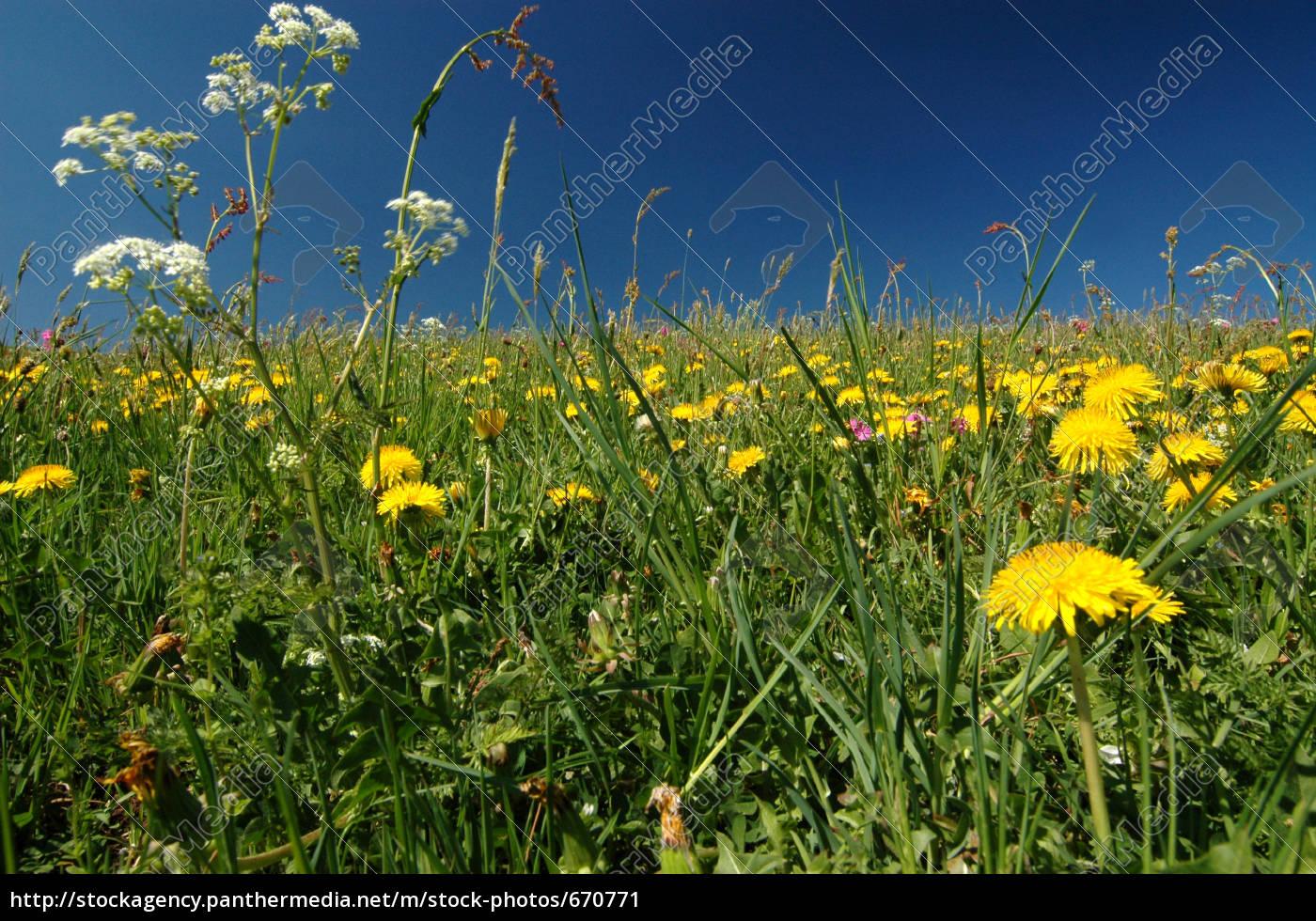 meadow - 670771