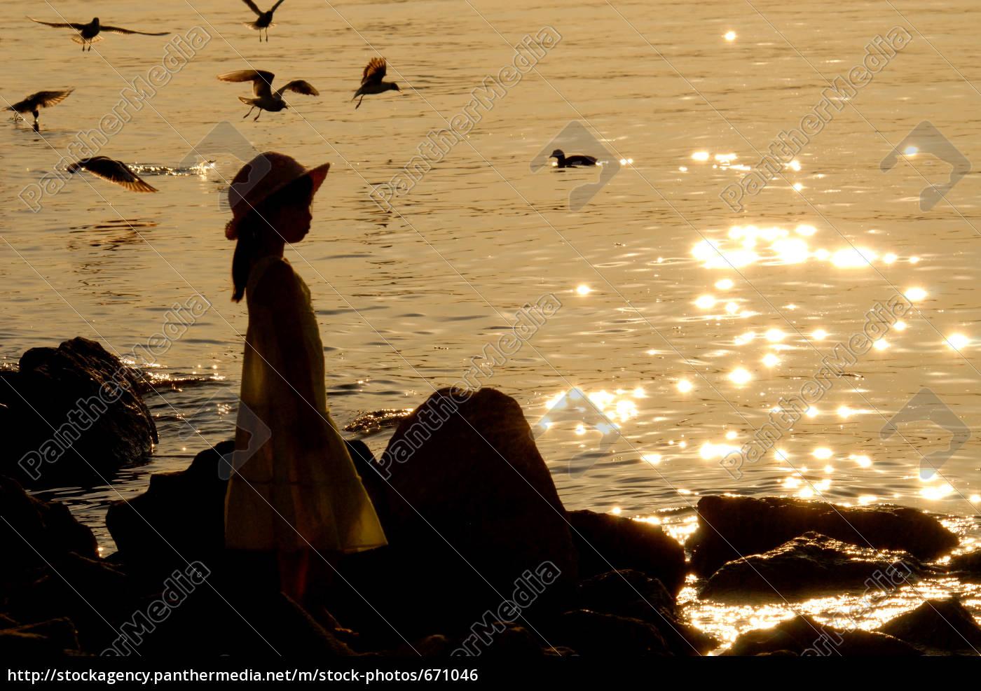 golden, evening - 671046