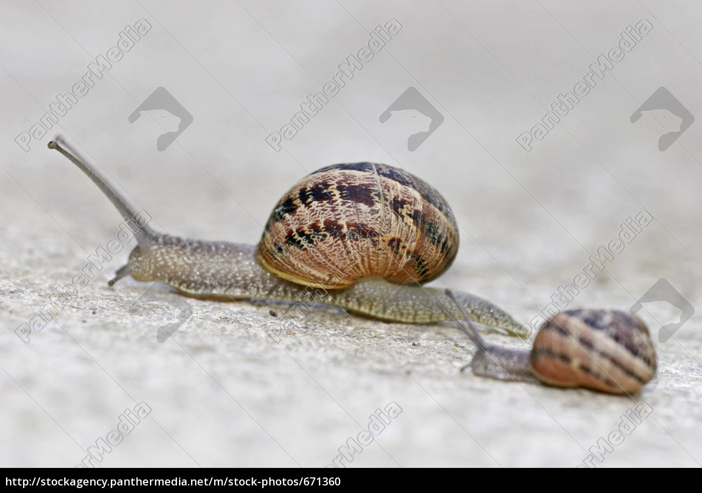 snails, on, tour - 671360