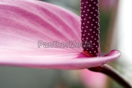tropical, beauty, flamingo, flower - 672116