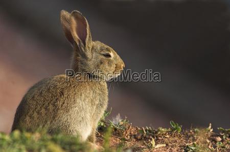 rabbit - 673131
