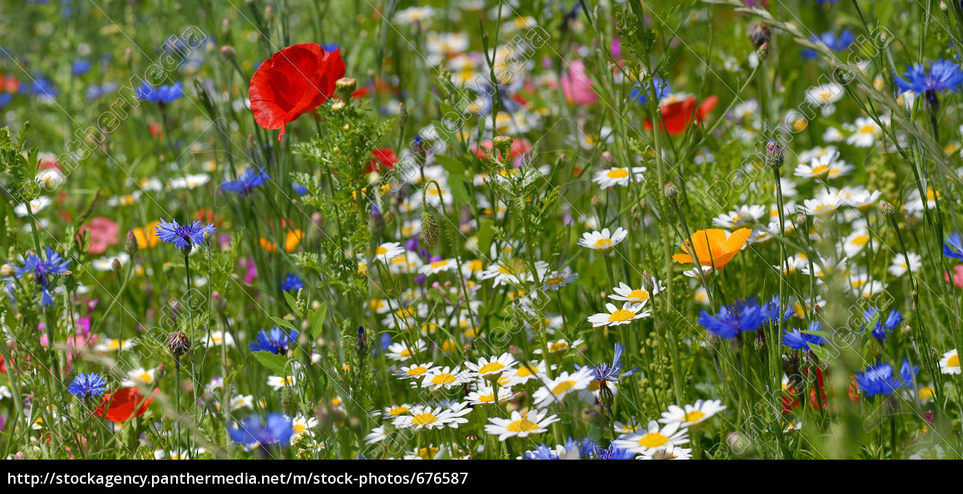 summer, meadow - 676587