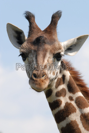 baby, giraffe - 677393