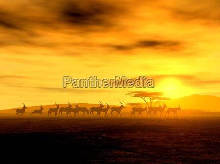 the walk iii oryx