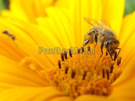 sun, flower, bee - 682341