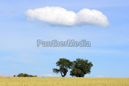 trees, with, cloud, and, wheat, field - 686183