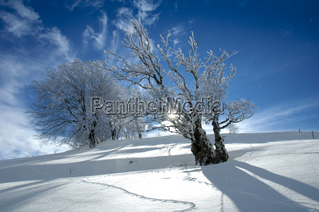 winter, landscape, 19 - 686991