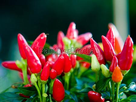 fiery, kisses - 688003
