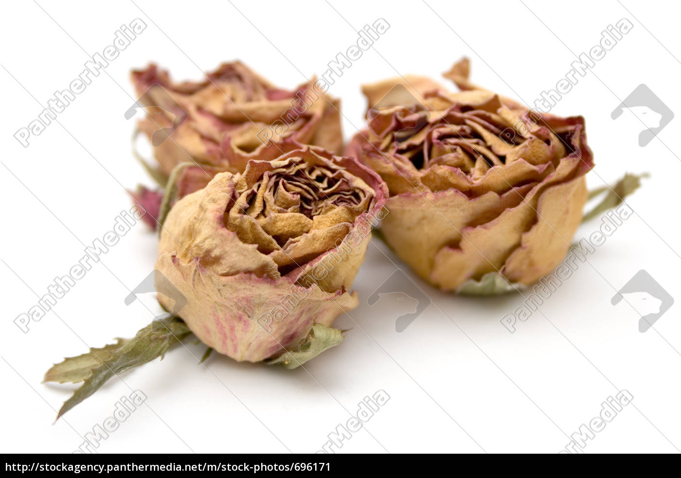 dried, rose, petals - 696171