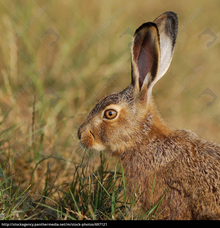 baby, rabbit, portrait - 697121