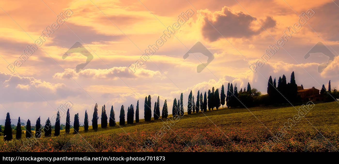 the, real, tuscany - 701873