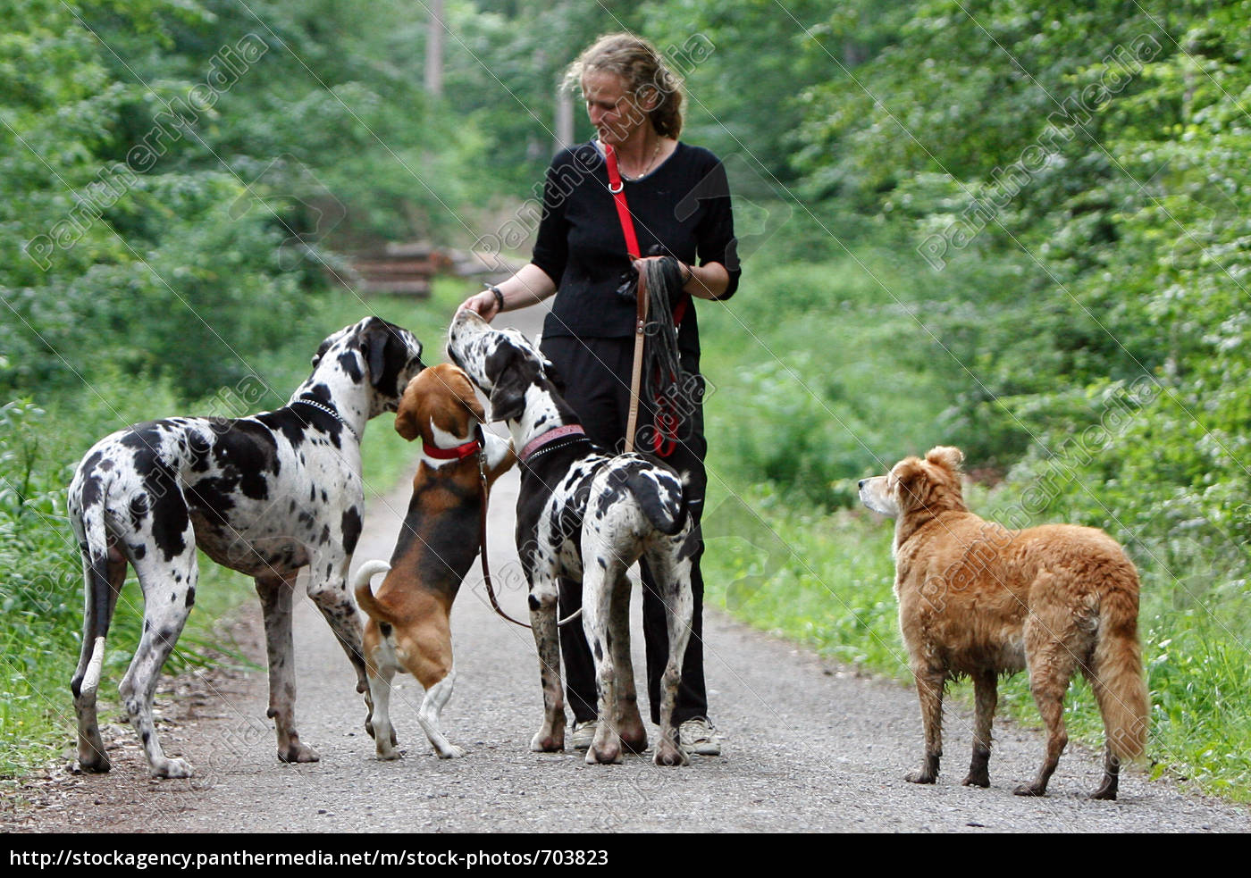 woman, with, many, dogs - 703823