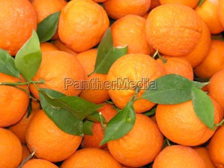 oranges - 706385