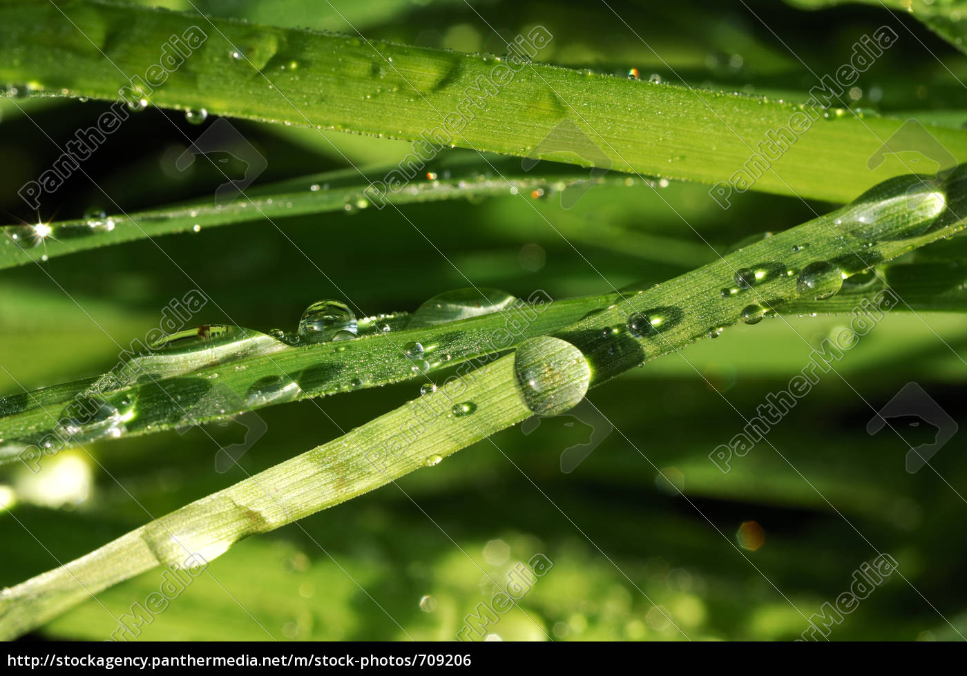 leaves, of, grass - 709206