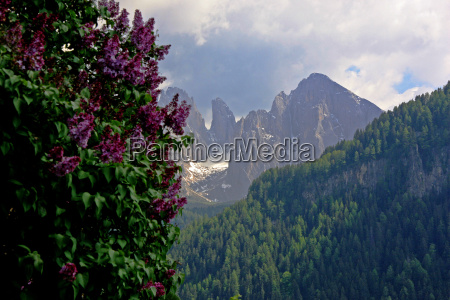 lilac and mountains