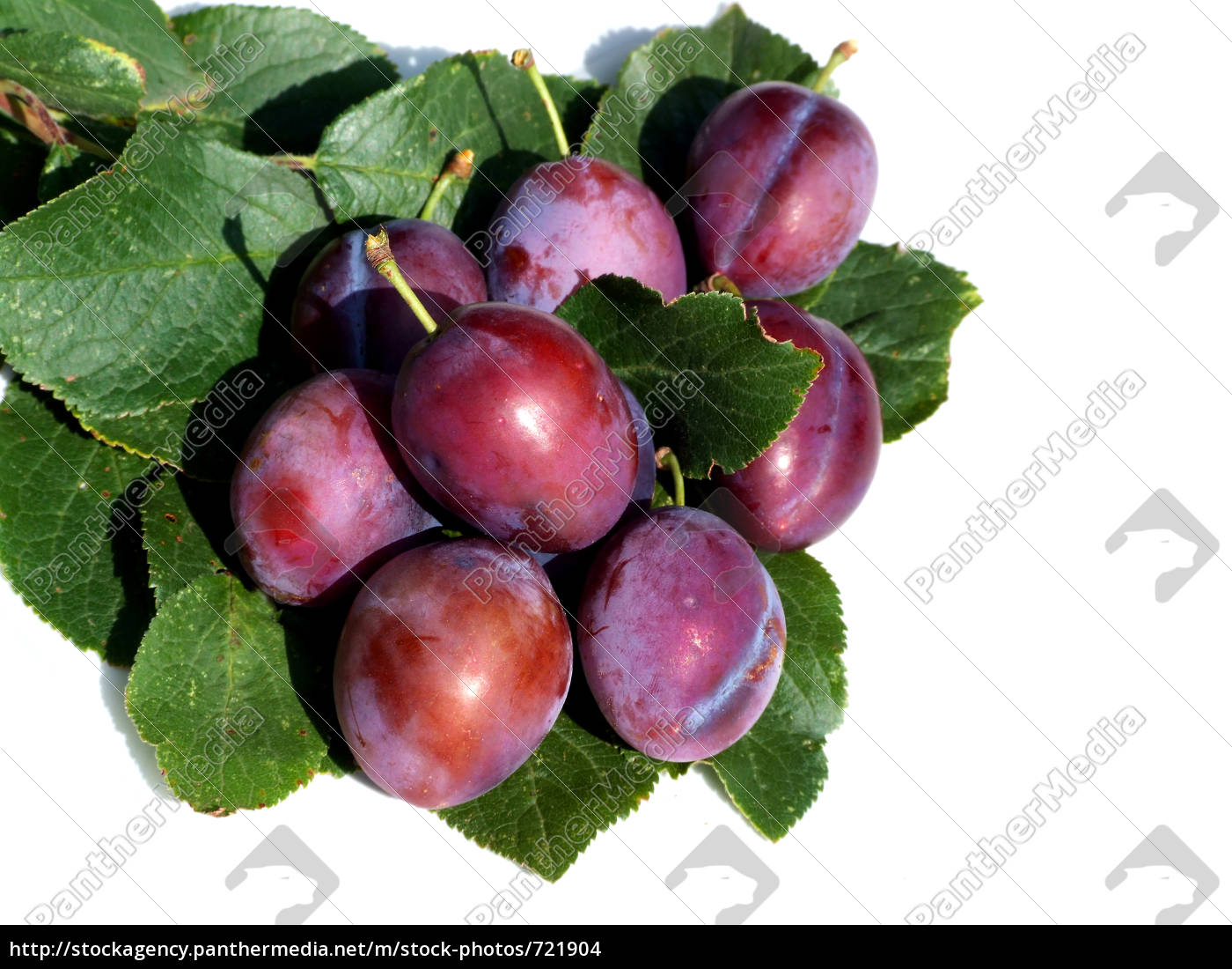 plums - 721904