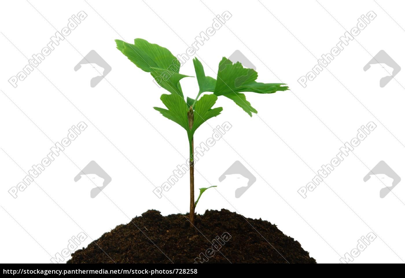trees - 728258