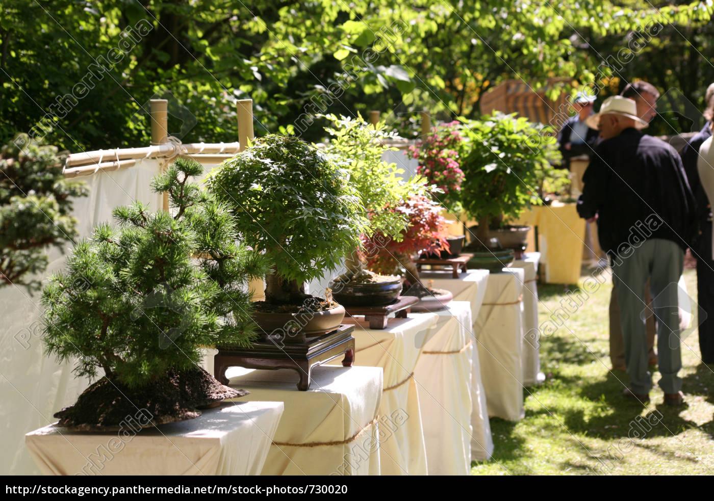 bonsai, exhibition - 730020