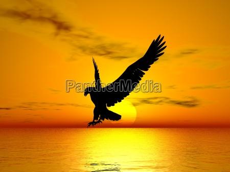 eagle - 730698