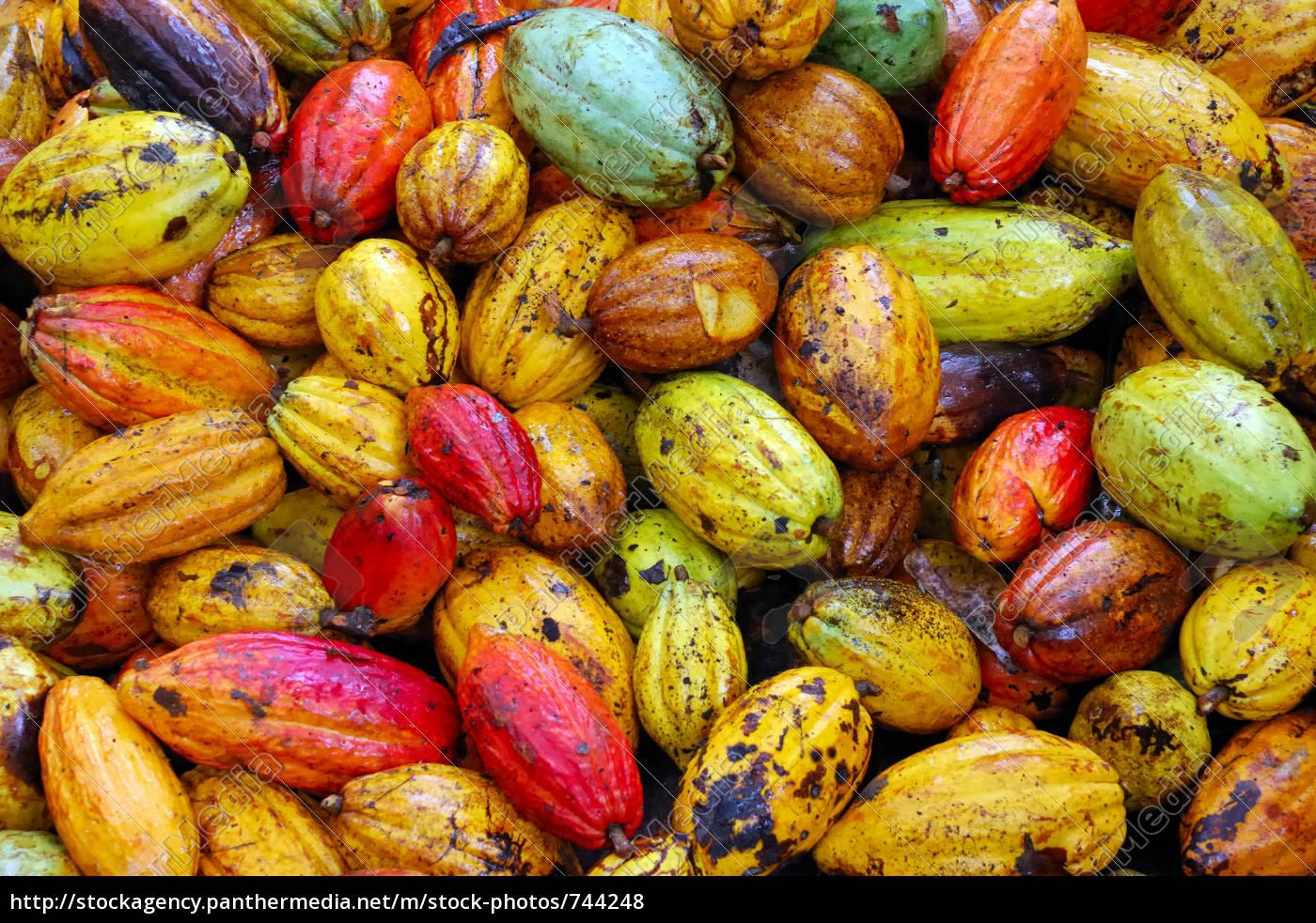 cocoa, 3 - 744248