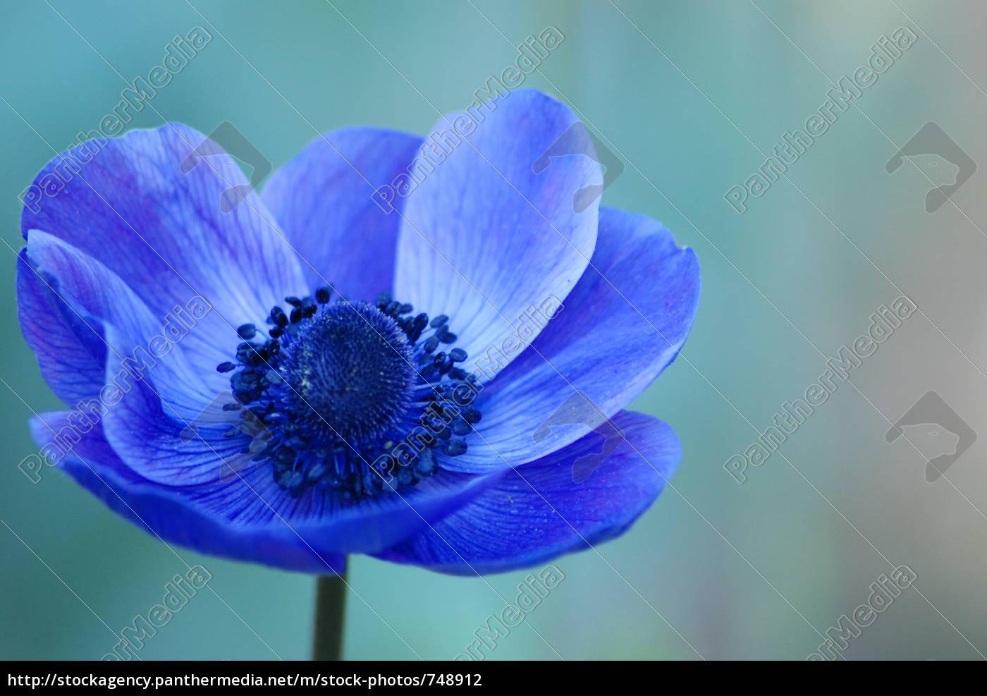 anemone - 748912
