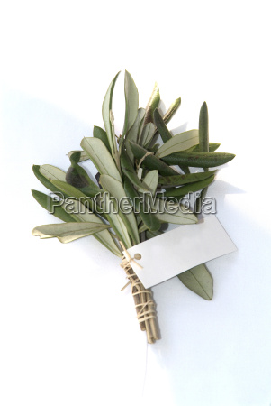 branch with nameplate