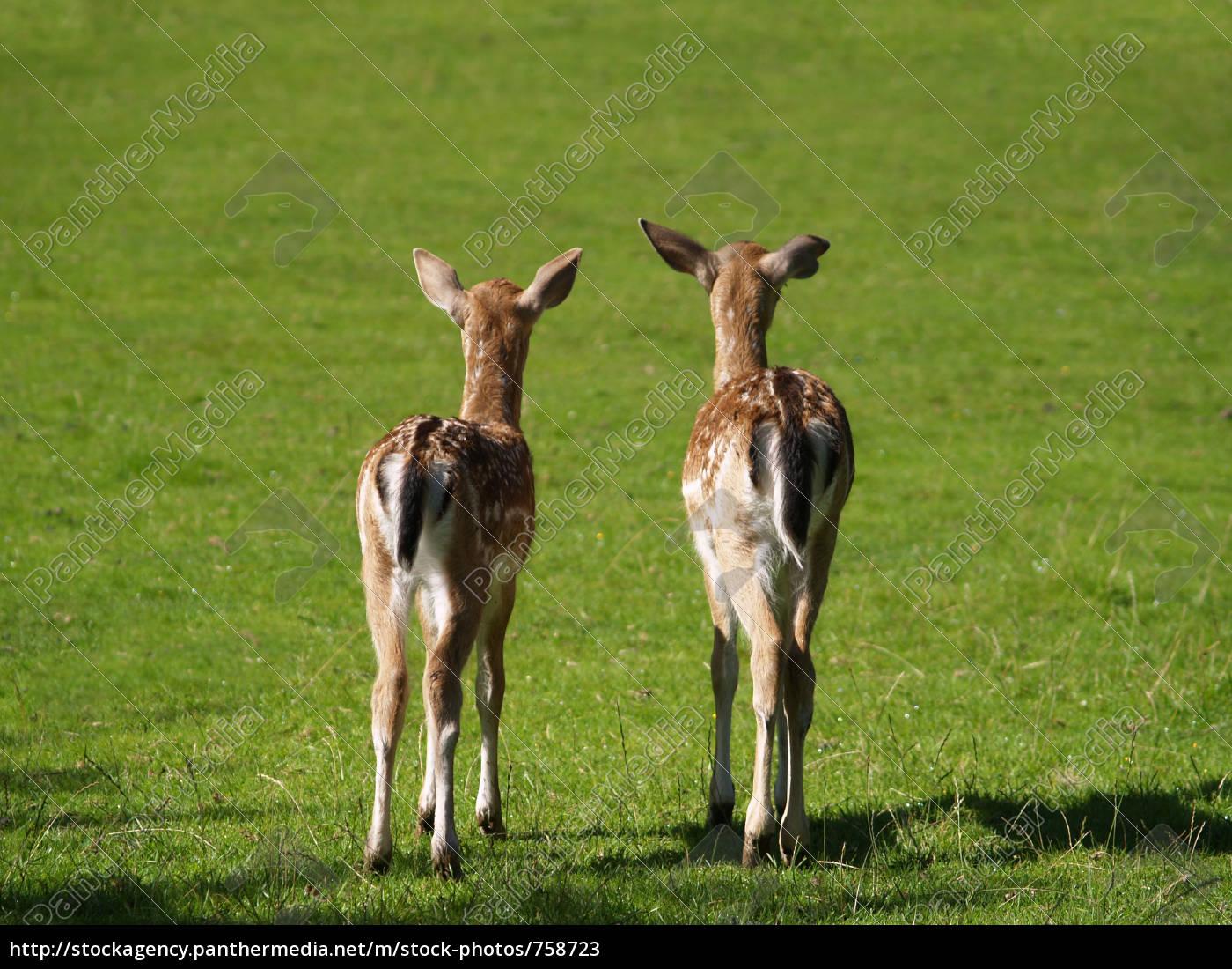 bambi - 758723