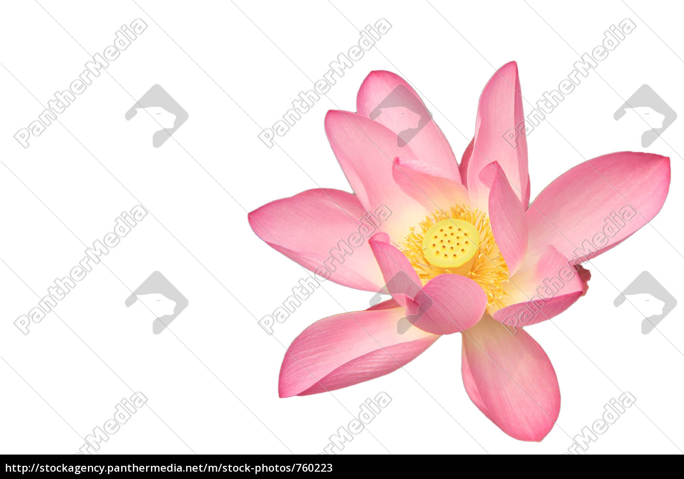 lotus, flower, from, the, summer, palace - 760223