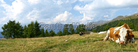 mountain, panorama, with, cow - 763029