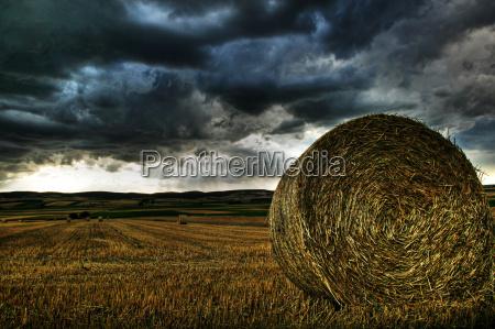 harvest, time - 769251
