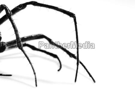 spider - 773939