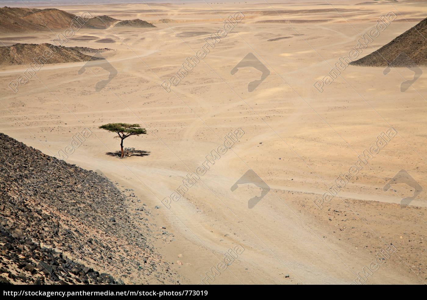 the, living, desert. - 773019