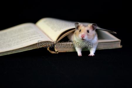bookworm 7