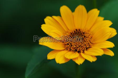 flower lens test